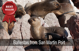 ballestas from san martin port