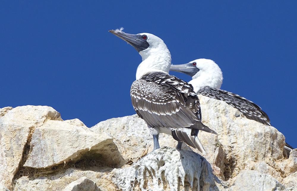 Wildlife in Ballestas  - LAS ADVENTURE