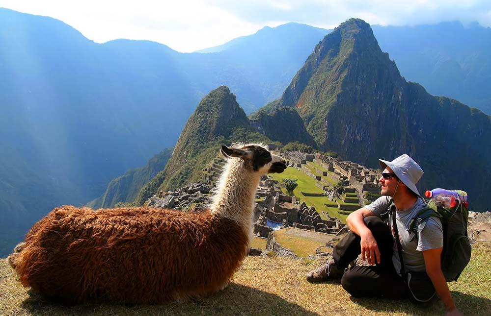 Lama Peru