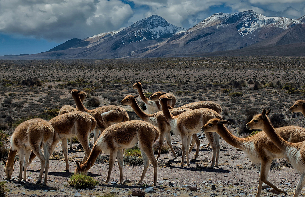 Wildlife in Colca - LAS ADVENTURE